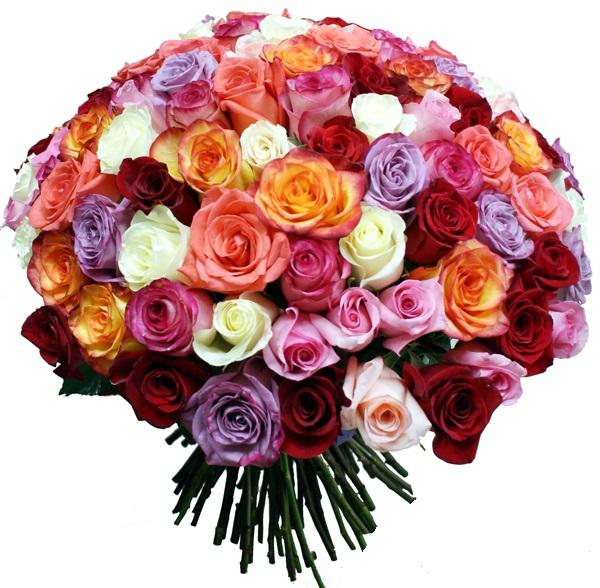 Английские розы Фото и сорта английских роз  Садовые