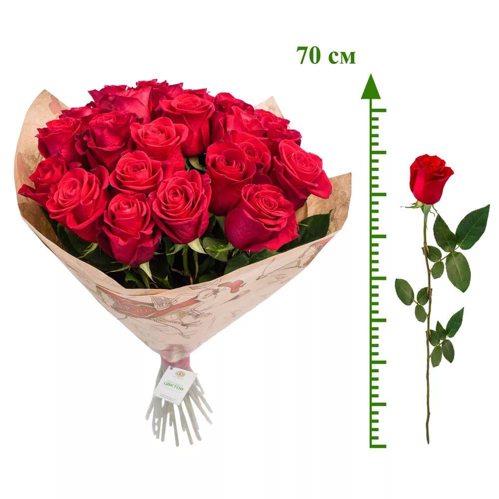 Купить высокий пакет для розы живые цветы оптом в питере