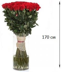 Самые высокие розы купить купить цветы монтана россия