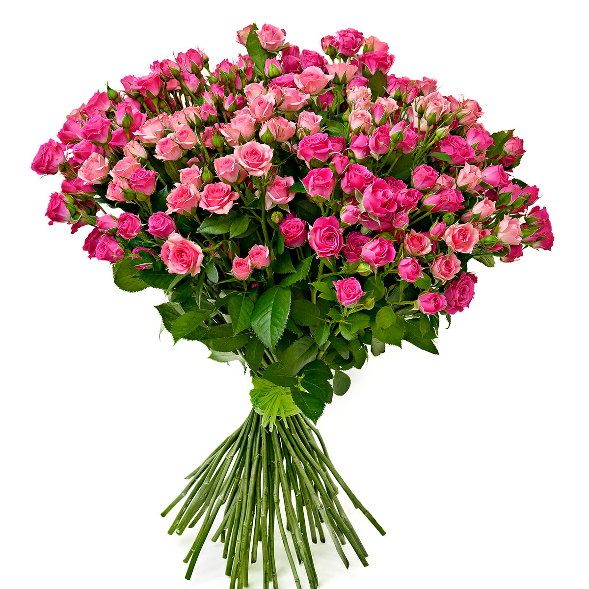 роза кустовая букет фото