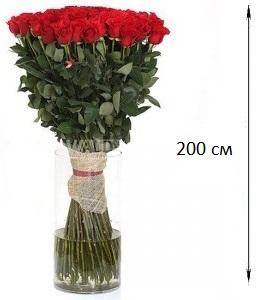 большие розы картинки