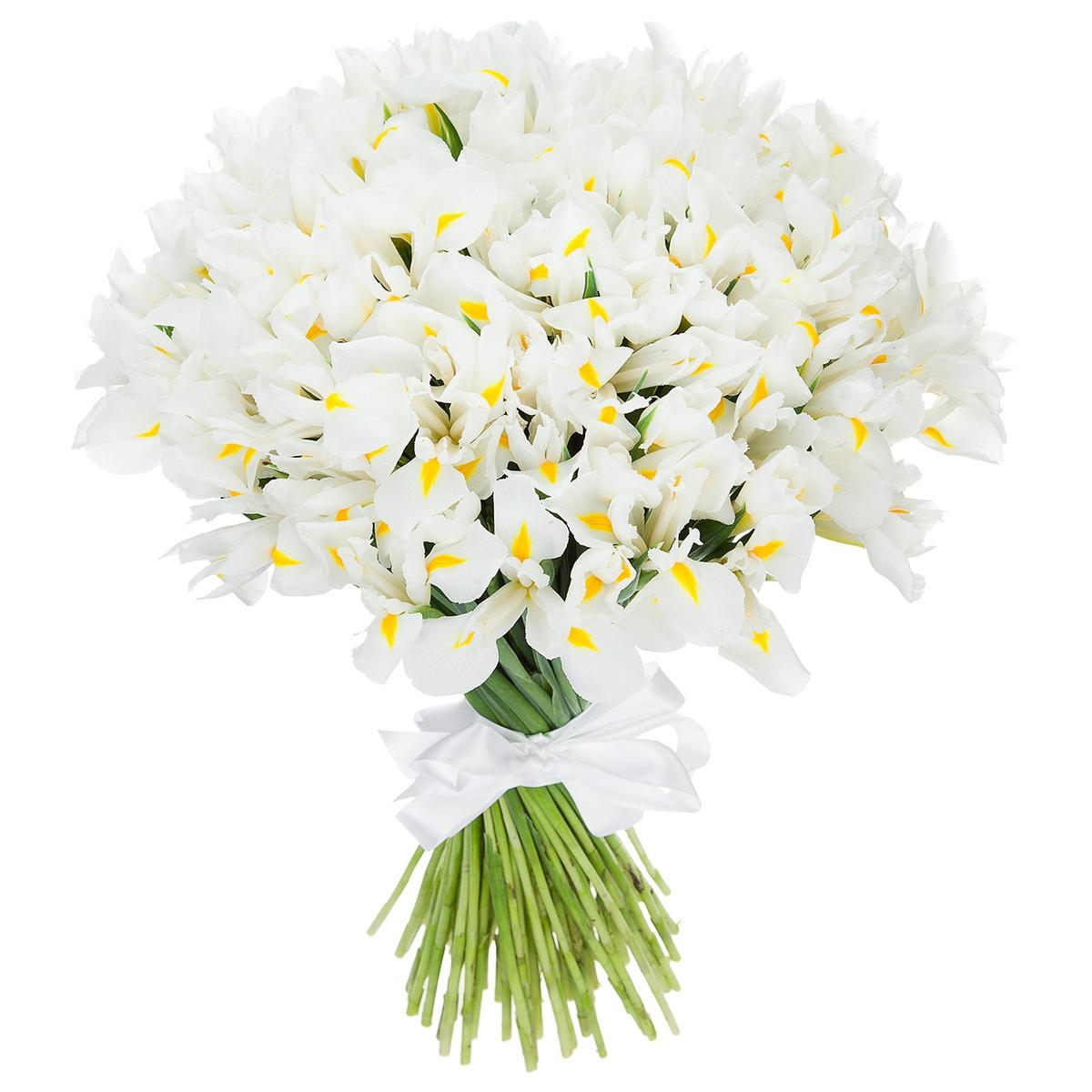 Купить цветы нарциссы в израиле заказать семена цветов интернет