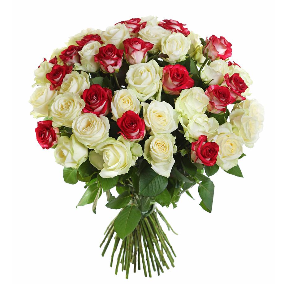 высокая комнатная роза уход в домашних условиях