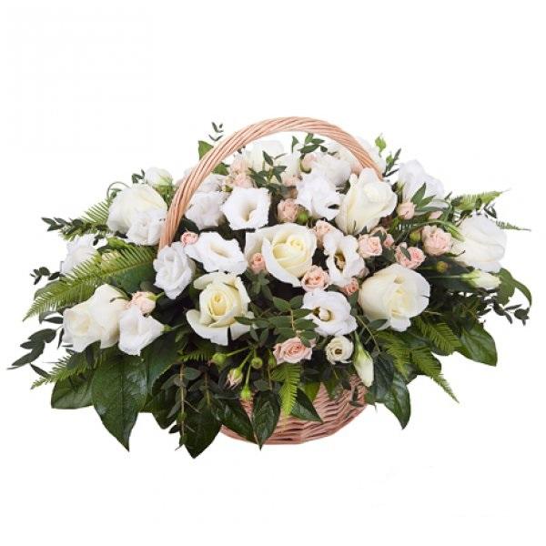 фото роза бели