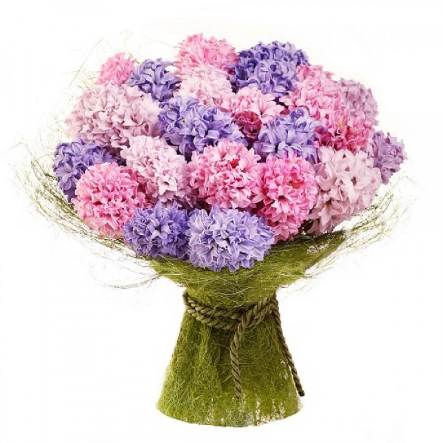 Заказать букет из гиацинтов доставка цветов запорожье на дом недорого