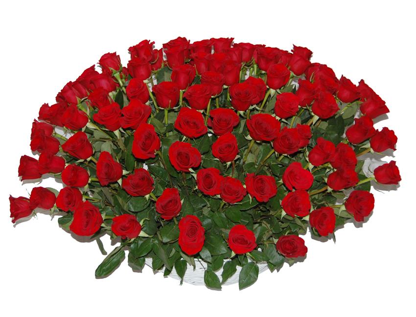 цветов красивые анимация картинки розы огромные