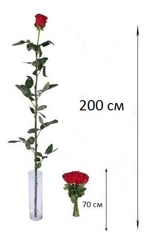 Купить высокие розы 2 метра киев доставка цветов